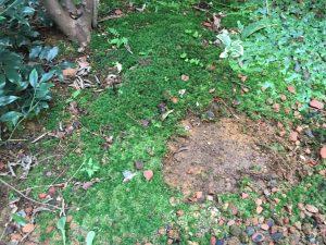 苔をはがした中庭